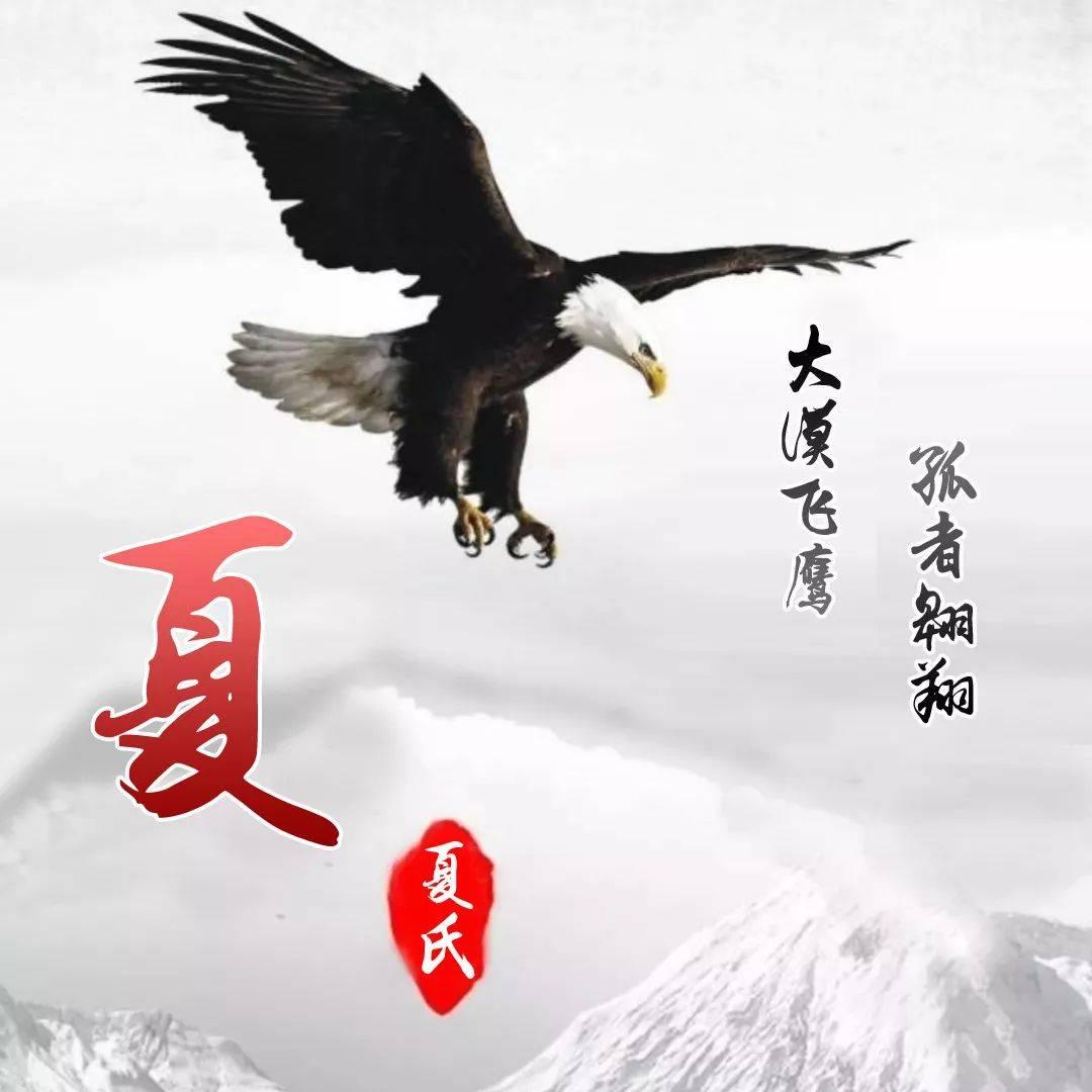 【姓氏头像】大漠飞鹰大气头像