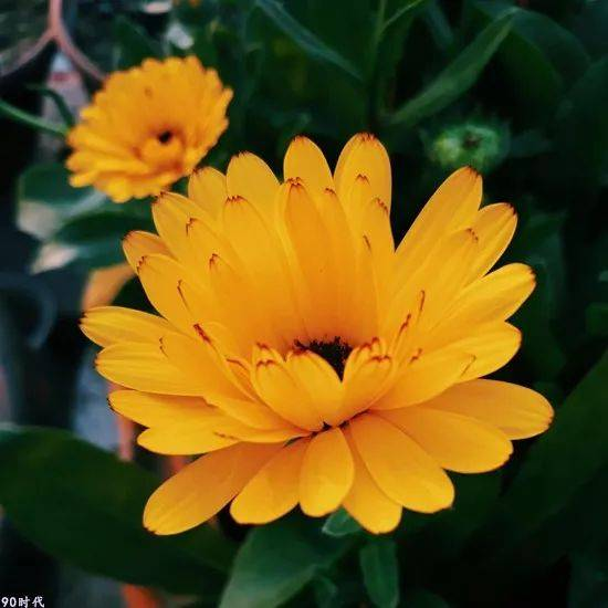 頭像| 風景花朵圖片 漂亮的大自然風景,給與你好運